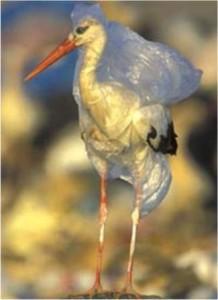 Aves y animales marinos mueren ahogados en bolsas plásticas
